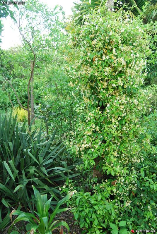 Cordyline australis GBPIX_photo_532567