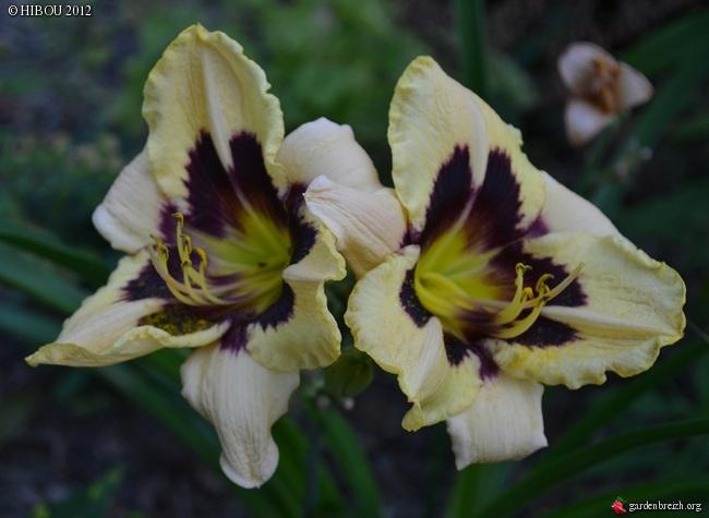 mon jeune jardin de touraine - Page 2 GBPIX_photo_533616