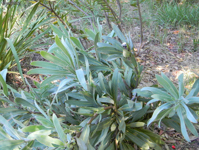 Les botanistes  - Page 8 GBPIX_photo_535142