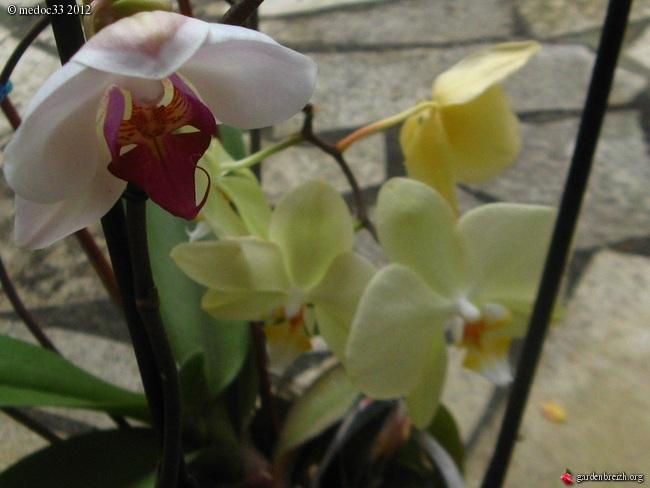 Floraisons d'intérieur  - Page 2 GBPIX_photo_540835