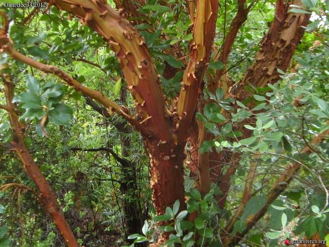 Mon jardin Médocain, quelques vues au fil du temps GBPIX_photo_540847