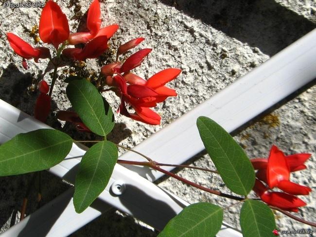Mon jardin Médocain, quelques vues au fil du temps GBPIX_photo_542818