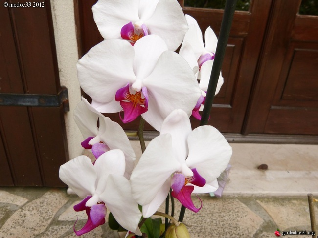 Floraisons d'intérieur  - Page 2 GBPIX_photo_543858