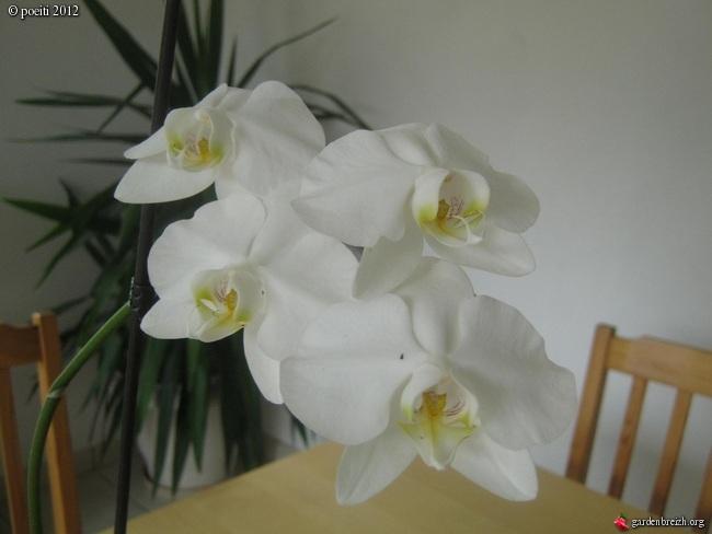Floraisons d'intérieur  - Page 2 GBPIX_photo_544305