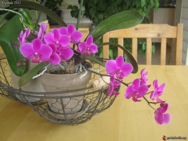 Floraisons d'intérieur  - Page 2 GBPIX_photo_544306
