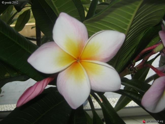 Floraisons d'intérieur  - Page 2 GBPIX_photo_544308