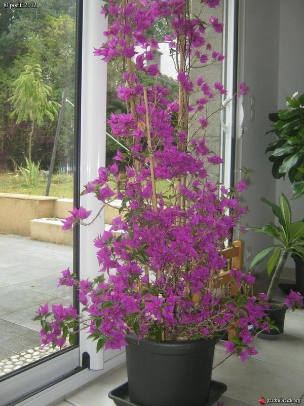 Floraisons d'intérieur  - Page 2 GBPIX_photo_544310