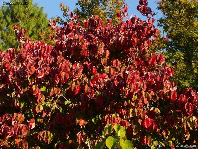 Mon jardin Médocain, quelques vues au fil du temps GBPIX_photo_545956