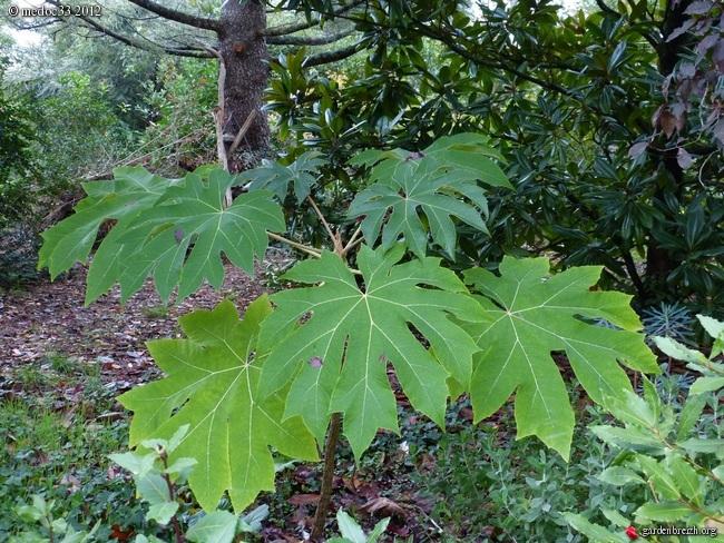 Mon jardin Médocain, quelques vues au fil du temps GBPIX_photo_546144