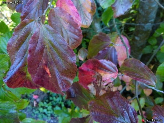 Mon jardin Médocain, quelques vues au fil du temps GBPIX_photo_546149
