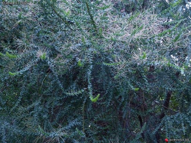 Mon jardin Médocain, quelques vues au fil du temps GBPIX_photo_546150