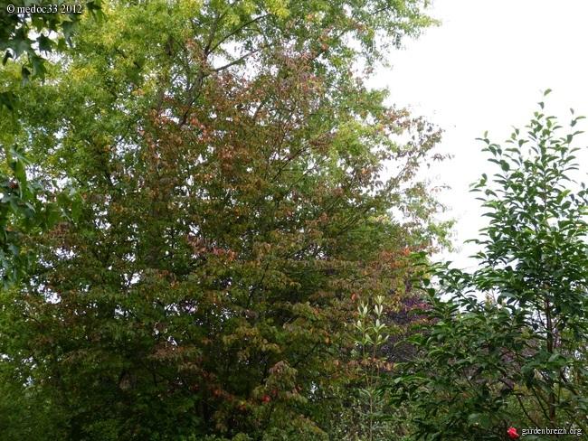 Mon jardin Médocain, quelques vues au fil du temps GBPIX_photo_546202