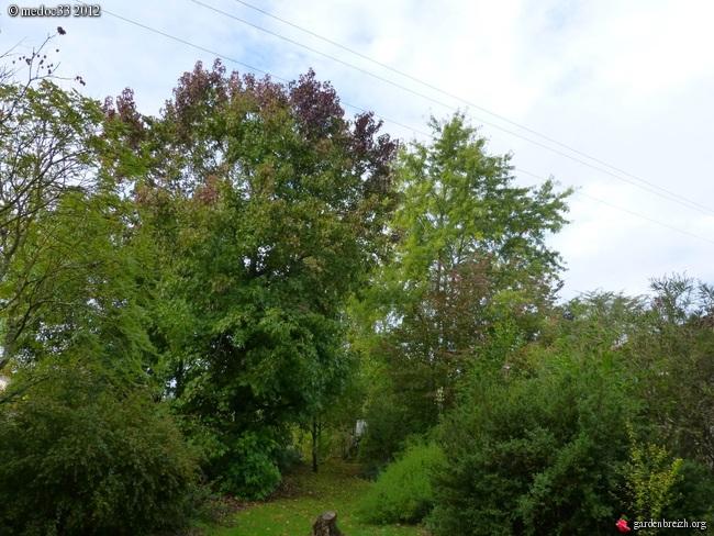 Mon jardin Médocain, quelques vues au fil du temps GBPIX_photo_546204