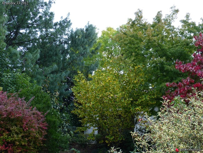 Mon jardin Médocain, quelques vues au fil du temps GBPIX_photo_546205