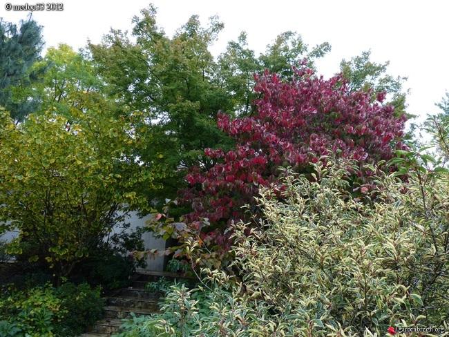 Mon jardin Médocain, quelques vues au fil du temps GBPIX_photo_546206