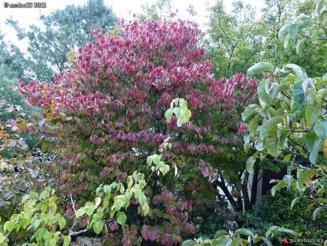 Mon jardin Médocain, quelques vues au fil du temps GBPIX_photo_546208