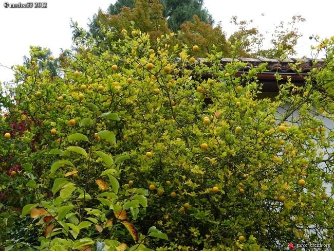 Mon jardin Médocain, quelques vues au fil du temps GBPIX_photo_546209