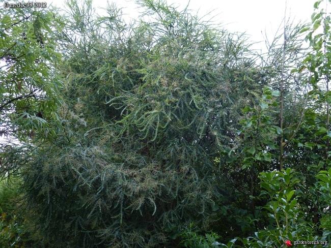 Mon jardin Médocain, quelques vues au fil du temps GBPIX_photo_546417