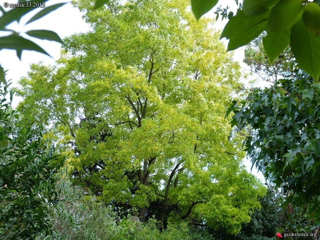 Mon jardin Médocain, quelques vues au fil du temps GBPIX_photo_546423