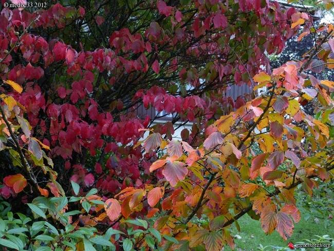 Mon jardin Médocain, quelques vues au fil du temps GBPIX_photo_547536