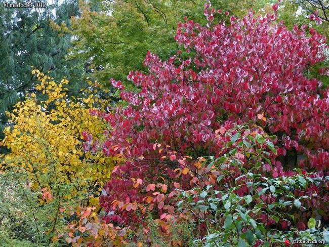 Mon jardin Médocain, quelques vues au fil du temps GBPIX_photo_547537