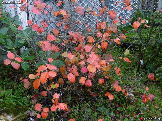 Mon jardin Médocain, quelques vues au fil du temps GBPIX_photo_547538