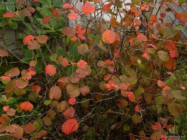 Mon jardin Médocain, quelques vues au fil du temps GBPIX_photo_547539