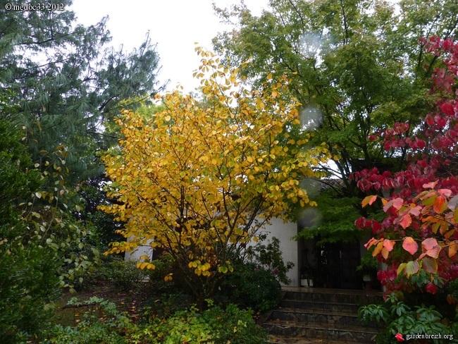 Mon jardin Médocain, quelques vues au fil du temps GBPIX_photo_547541