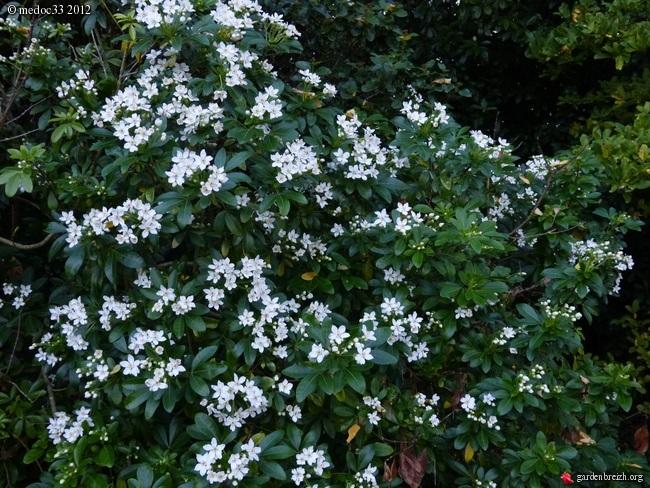 Mon jardin Médocain, quelques vues au fil du temps - Page 2 GBPIX_photo_548049