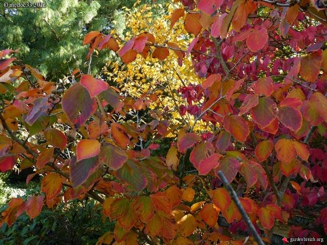 Mon jardin Médocain, quelques vues au fil du temps GBPIX_photo_548050