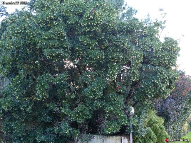 Mon jardin Médocain, quelques vues au fil du temps GBPIX_photo_548057