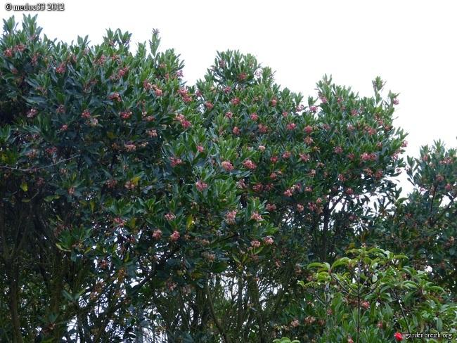 Mon jardin Médocain, quelques vues au fil du temps GBPIX_photo_548063