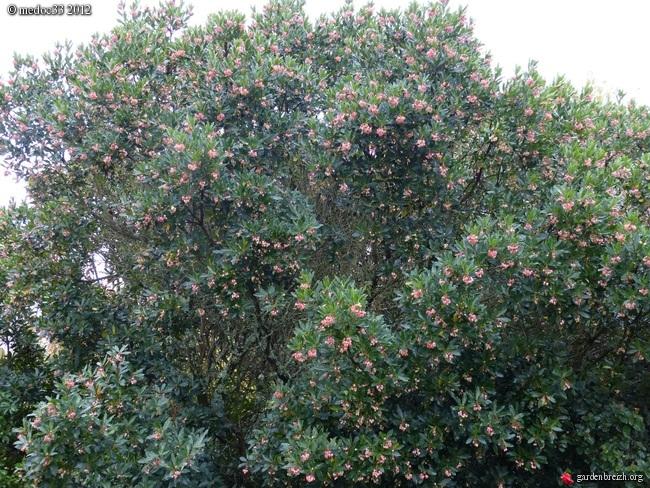 Mon jardin Médocain, quelques vues au fil du temps GBPIX_photo_548065