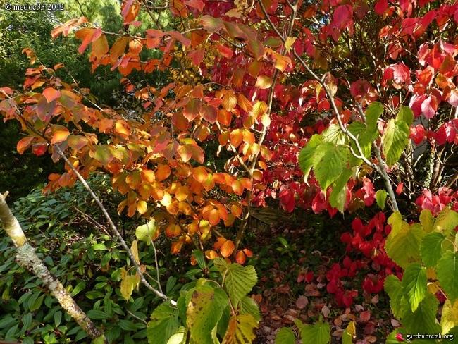 Mon jardin Médocain, quelques vues au fil du temps GBPIX_photo_548070