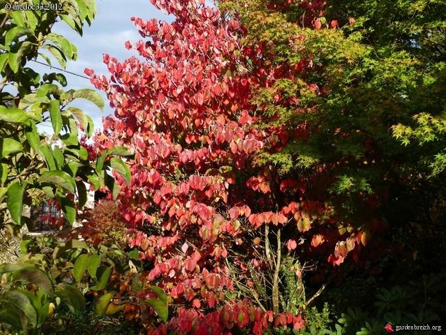 Mon jardin Médocain, quelques vues au fil du temps GBPIX_photo_548073