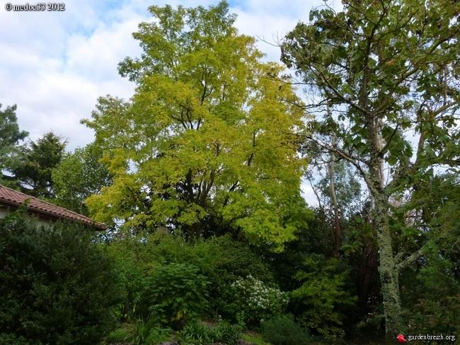 Mon jardin Médocain, quelques vues au fil du temps GBPIX_photo_548075