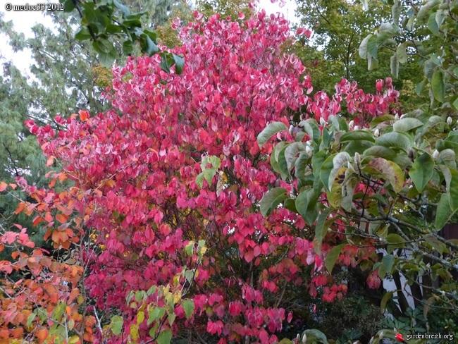 Mon jardin Médocain, quelques vues au fil du temps GBPIX_photo_548077