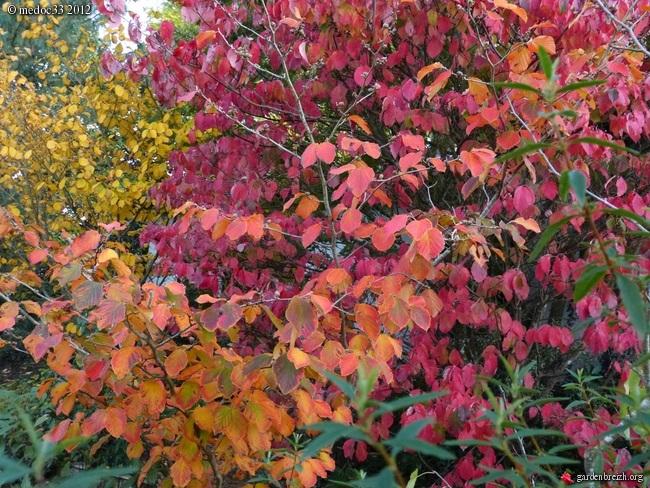 Mon jardin Médocain, quelques vues au fil du temps GBPIX_photo_548078