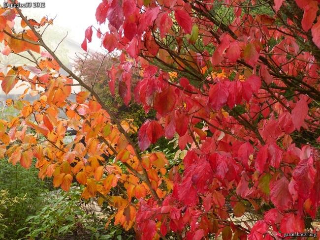 Mon jardin Médocain, quelques vues au fil du temps GBPIX_photo_548995