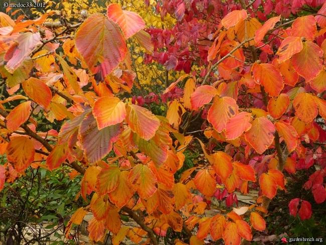 Mon jardin Médocain, quelques vues au fil du temps GBPIX_photo_548998