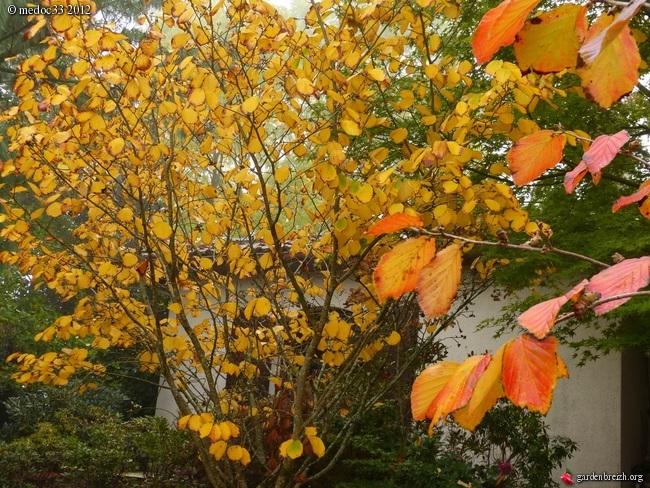 Mon jardin Médocain, quelques vues au fil du temps GBPIX_photo_549001