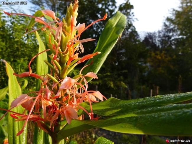 floraisons d'octobre - Page 9 GBPIX_photo_549515