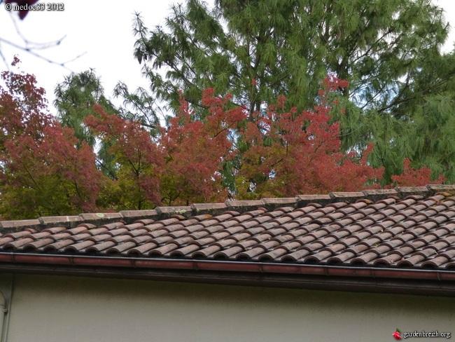 Mon jardin Médocain, quelques vues au fil du temps GBPIX_photo_549930