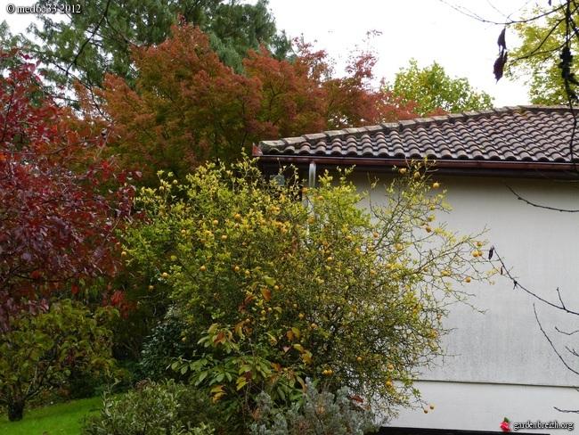 Mon jardin Médocain, quelques vues au fil du temps GBPIX_photo_549931
