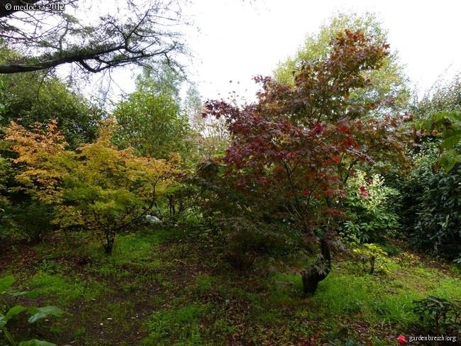 Mon jardin Médocain, quelques vues au fil du temps GBPIX_photo_549933
