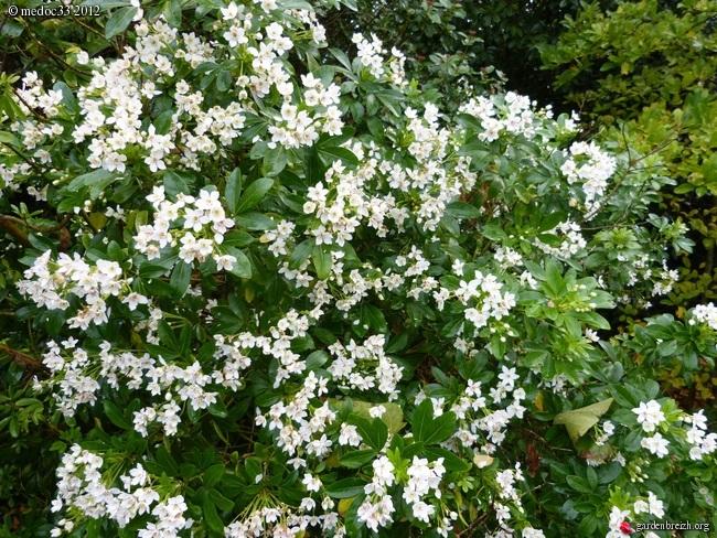 Mon jardin Médocain, quelques vues au fil du temps GBPIX_photo_549939