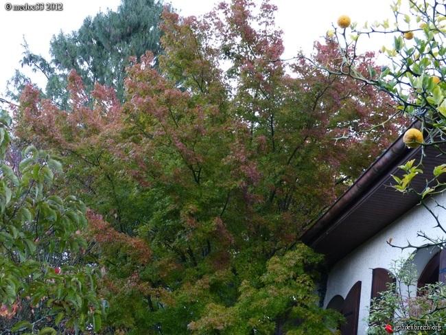 Mon jardin Médocain, quelques vues au fil du temps GBPIX_photo_549942
