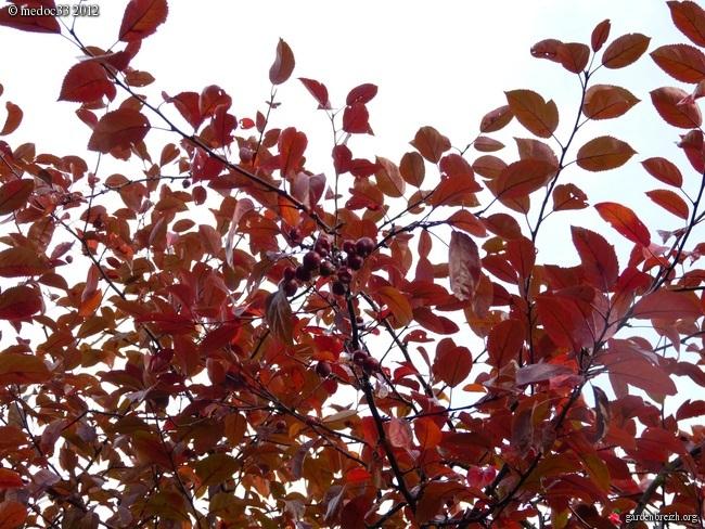Mon jardin Médocain, quelques vues au fil du temps GBPIX_photo_549950