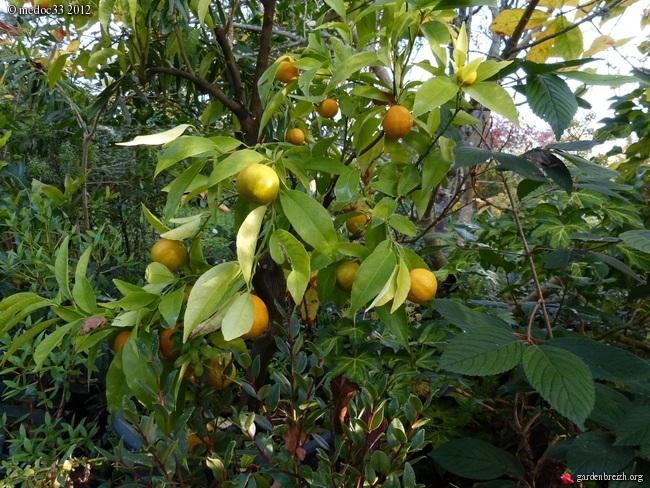Mon jardin Médocain, quelques vues au fil du temps GBPIX_photo_549982