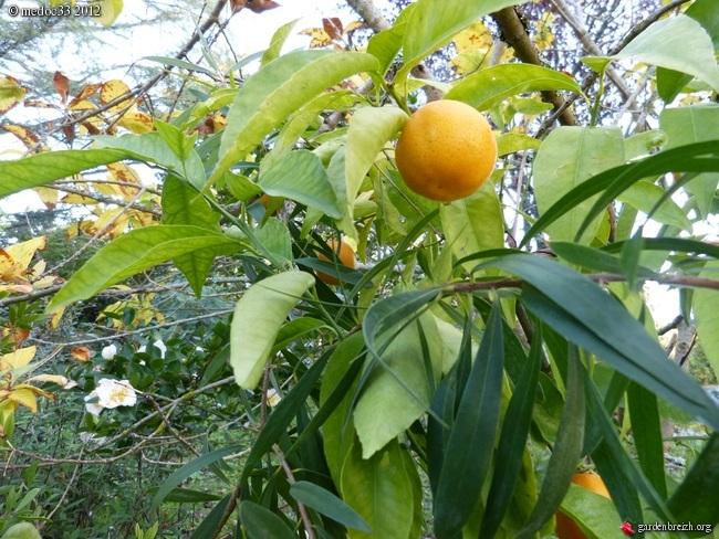 Mon jardin Médocain, quelques vues au fil du temps GBPIX_photo_549983